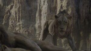 Scar Find Mufasa's Body