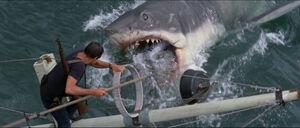 Jaws-movie-screencaps com-14190