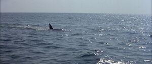 Jaws2-movie-screencaps com-13070