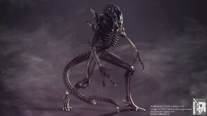 1314355460 aliens warrior nt fp 03