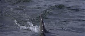 Jaws2-movie-screencaps com-13145