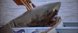 Jaws2-movie-screencaps com-12857