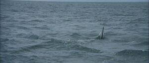 Jaws2-movie-screencaps com-9870