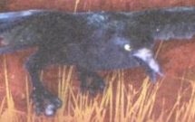 Raven mulgarath