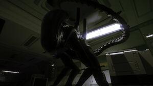 Alien-isolation-gallery-4