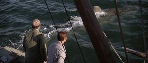 Jaws-movie-screencaps com-9723