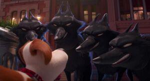 The Circus Wolves growling at Max