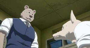 Legoshi and Riz anime 12