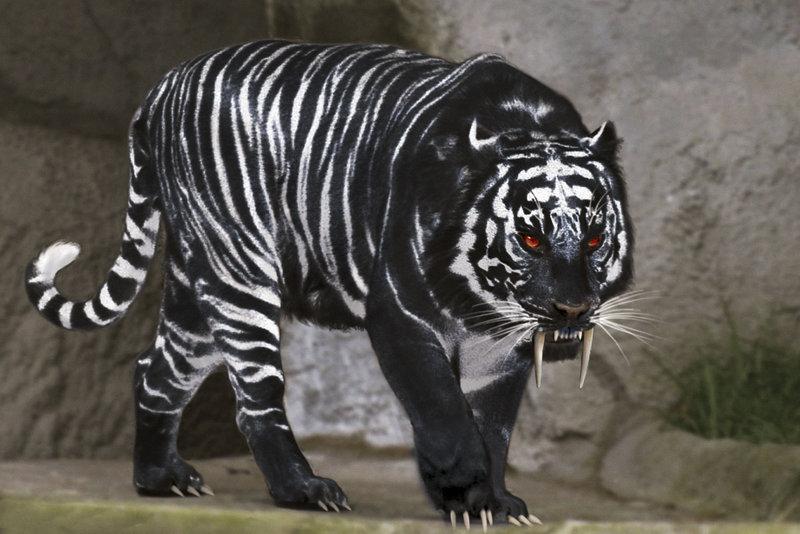 Tiger (Anansi Boys)