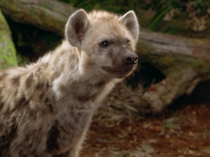 Tabaqui the Spotted Hyena