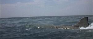 Jaws2-movie-screencaps com-9856