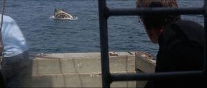 Jaws-movie-screencaps com-12313
