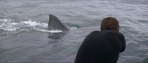 Jaws-movie-screencaps com-12019
