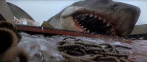 Jaws-movie-screencaps com-13907