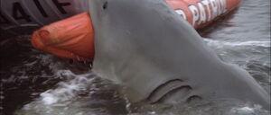 Jaws2-movie-screencaps com-10880