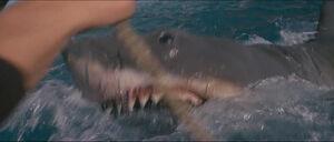 Jaws-movie-screencaps com-11618