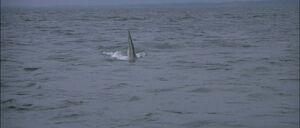 Jaws2-movie-screencaps com-9964