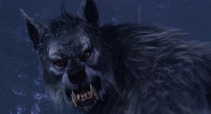 Grey Werewolf snarl