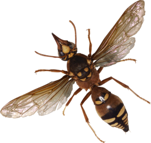 Bug PNG3981-1-