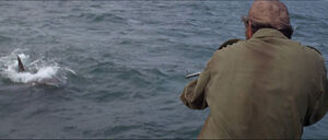 Jaws-movie-screencaps com-10037