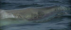Jaws2-movie-screencaps com-9997