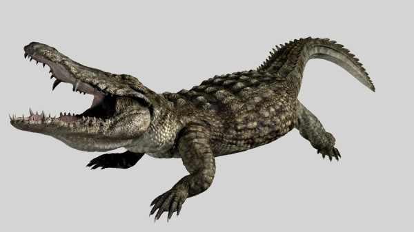 Black Lake Crocodiles