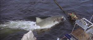 Jaws2-movie-screencaps com-13163