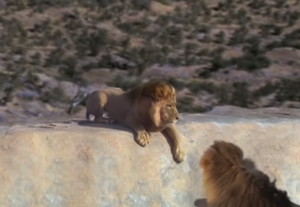 Pride Harry is stuck on the cliff