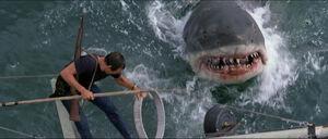 Jaws-movie-screencaps com-14193