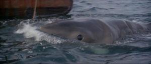 Jaws-movie-screencaps com-11624