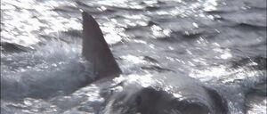 Jaws2-movie-screencaps com-9742