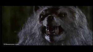 Bad moon werewolf transformation!