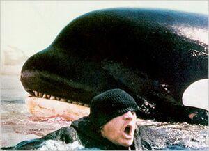 Orca5