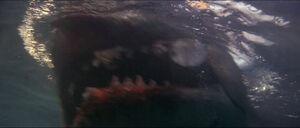 Jaws-movie-screencaps com-14292