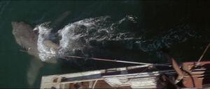 Jaws-movie-screencaps com-12682