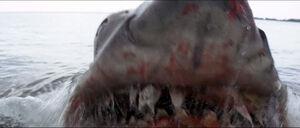 Jaws-movie-screencaps com-14187