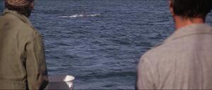 Jaws-movie-screencaps com-9670