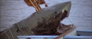 Jaws2-movie-screencaps com-12855