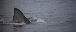 Jaws2-movie-screencaps com-12833