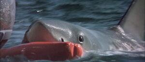 Jaws2-movie-screencaps com-10891