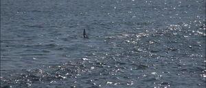 Jaws2-movie-screencaps com-8641