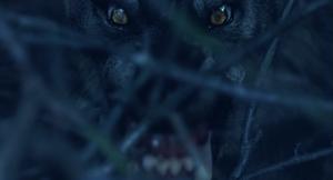 Grey Werewolf bushes
