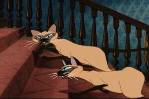 Si-Am-siamese-cats-19323653-720-480