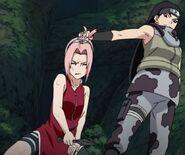 Kin and sakura