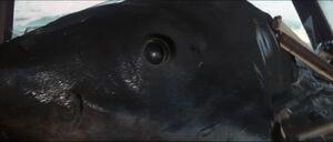 Jaws-movie-screencaps com-14037