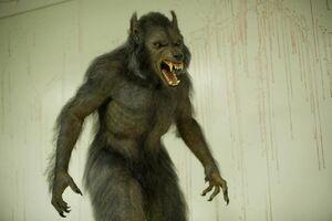 Werewolfcrimescene