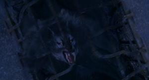 Grey Werewolf cage