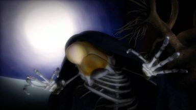 The Black Crow Black Coffin (2009 TV Series).jpg
