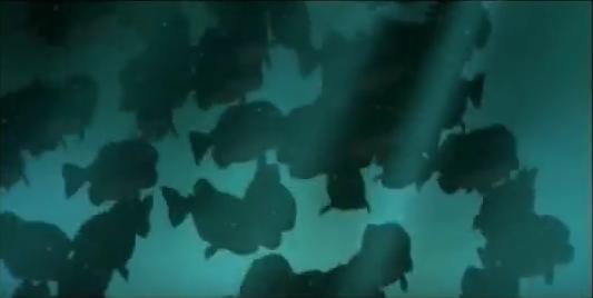 Piranhas (Help! I'm A Fish)