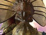 Cetus (The Kraken)